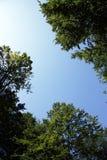 Bird shape on the blue sky Stock Photos