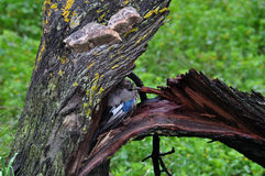 Bird sheltering broken tree Stock Photos