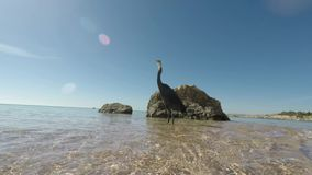 The bird on the shore of a tropical sea. Side of the sea. Summer in the tropics stock video footage