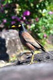 A Bird Scrutinizing the Horizon in Thailand Royalty Free Stock Photography