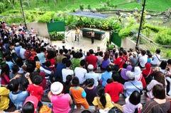 Bird show. The KL Bird Park Bird Show happening at the semi-air Amphitheater, Kuala Lumpur, Malaysia Royalty Free Stock Images