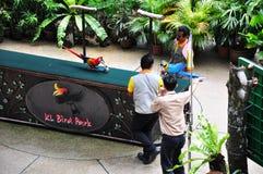Bird show. The KL Bird Park Bird Show happening at the semi-air Amphitheater, Kuala Lumpur, Malaysia Stock Photo