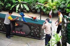 Bird show. The KL Bird Park Bird Show happening at the semi-air Amphitheater, Kuala Lumpur, Malaysia Stock Photography