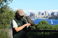 Bird Show  @ Taronga Zoo, Sydney Stock Photo