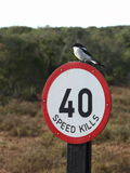 Bird on a sign. Royalty Free Stock Photos