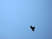 Bird silhouette. Silhouette of a bird in flight against blue sky Stock Photography