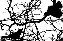 Bird silhouette. Silhouette of two birds in a tree, one flying royalty free illustration