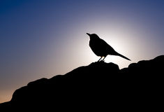 Bird silhouette. Bird against the sunlight, South Africa Royalty Free Stock Photos