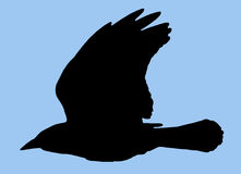 Bird Silhouette Royalty Free Stock Photography