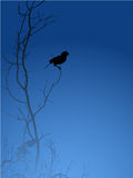 Bird Silhouette Royalty Free Stock Photo