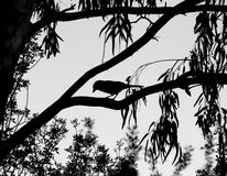 Bird Silhouette. Japanese style silhouette photograph of a bird in a tree framed by foliage - Black and white Stock Photography