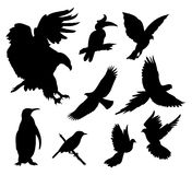 Bird silhouette. Collection of bird silhouette in some position, isolation white, vector illustration Royalty Free Stock Photo