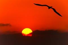 Bird Silhouette Royalty Free Stock Photos