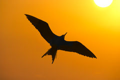 Free Bird Silhouette Royalty Free Stock Photography - 63969547