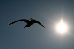 Bird Silhouette. A silhouette of a bird flying Stock Photos
