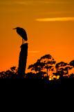 Bird silhouette. A silhouette of a bird at sunset Royalty Free Stock Photography