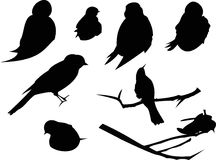 Bird Silhouette Animal Clip Art. The Bird Silhouette includes eight, individual animal graphics Stock Images