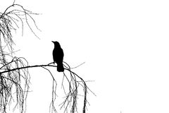 Bird Silhouette Stock Image