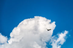 Bird silhouette in the blue sky. Blue sky with bird silhouette Stock Image