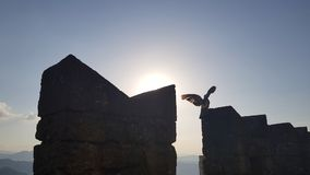 Bird in silhouette on castle wall. In sunset time royalty free stock images