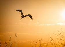 Bird in silhouette Royalty Free Stock Images