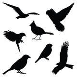 Bird silhouette illustration set. Isolated on white background Royalty Free Stock Photos