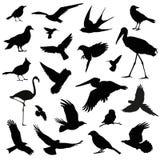 Bird silhouette illustration set. On white Stock Image