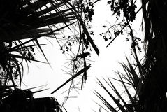 Bird silhouette in palm leaves. Bird in palm leaves and fruit, silhouetted against the sky. Taken at Roberts Springs, Nevada Royalty Free Stock Image