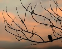 Bird in silhouette Royalty Free Stock Image