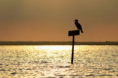 Bird silhouette in Ria Formosa Park, Portugal Royalty Free Stock Photos