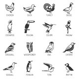 Bird Silhouette Set Royalty Free Stock Photos