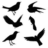 Bird silhouette set. Isolated on white royalty free illustration