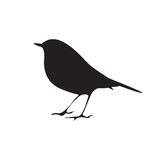 Bird silhouette sitting on the branch. Vector symbol Royalty Free Stock Images