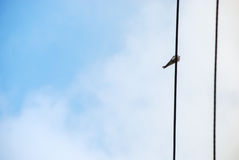 Bird. Silhouette of bird sitting on wires royalty free stock photography