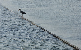 Bird silhouette standing on poles. Water dike Royalty Free Stock Photo