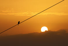 Bird silhouette staying on cable over the sun Royalty Free Stock Image