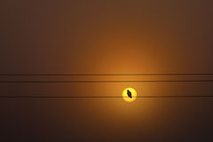 Bird silhouette staying on cable over the sun Royalty Free Stock Images