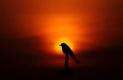 Bird silhouette Stock Image