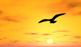 Bird Silhouette and Sunset. A bird Silhouette with a sunset sky background Stock Photo