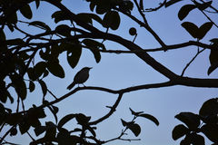 The bird silhouette. The silhouette of a tinny bird at the tree stock image