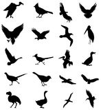 Bird silhouettes Stock Photography