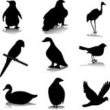 Bird silhouettes. Set of different bird silhouettes Stock Photo