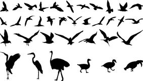 Bird silhouettes. Illustrations of birds and ducks etc Stock Image