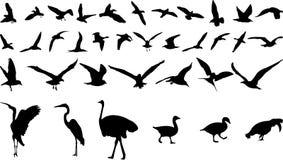 Bird silhouettes Stock Image