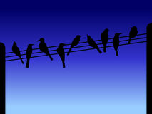 Bird silhouettes. On wires and posts Royalty Free Stock Photo