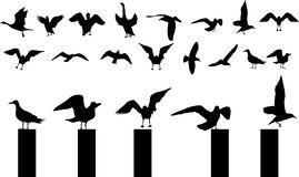 Bird silhouettes. Silhouettes of birds flying and standing Royalty Free Stock Images
