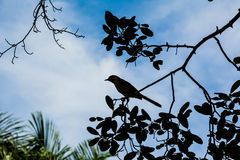 Bird siluette. In Vinales, Cuba royalty free stock images