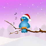 Bird singing at Christmas Stock Photo
