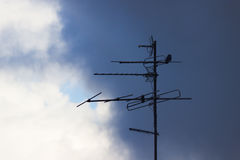 Bird sit on an antenne Royalty Free Stock Images