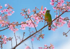 The bird sit on blooming flower branch Royalty Free Stock Image